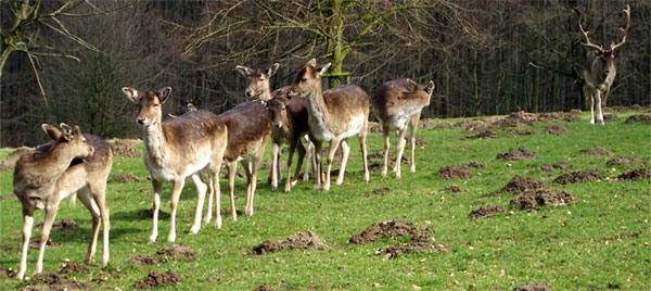 Bielefeld - Tierpark