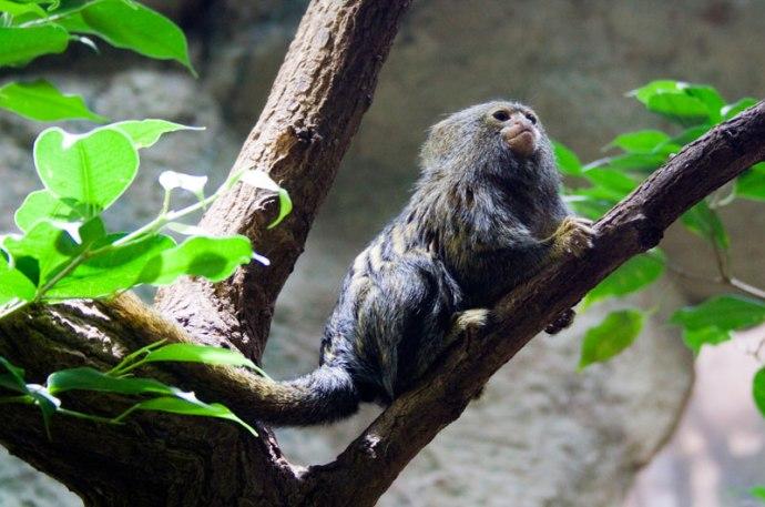 Bochum - Zoo